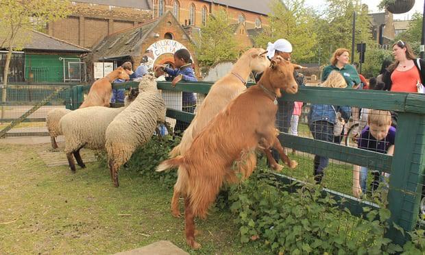 Trang trại thú nuôi vô cùng đáng yêu tại thành phố London - Ảnh 2.
