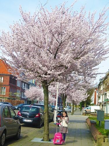 Ngắm cảnh đẹp như tranh vẽ tại Bỉ vào tháng 4 - Ảnh 2.