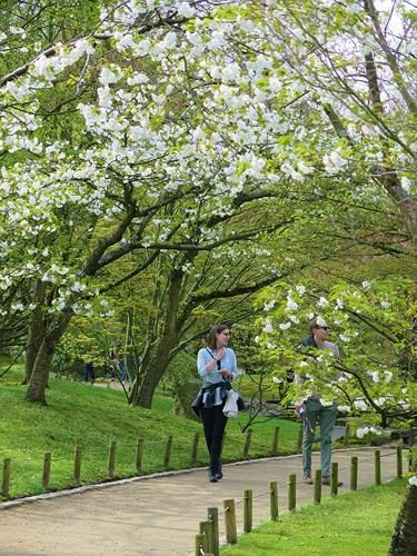 Ngắm cảnh đẹp như tranh vẽ tại Bỉ vào tháng 4 - Ảnh 12.