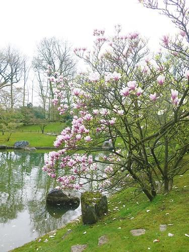 Ngắm cảnh đẹp như tranh vẽ tại Bỉ vào tháng 4 - Ảnh 7.