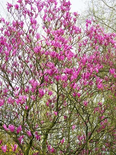 Ngắm cảnh đẹp như tranh vẽ tại Bỉ vào tháng 4 - Ảnh 9.