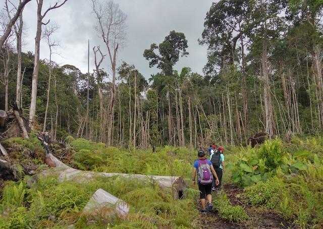 Những công viên quốc gia đẹp nhất Malaysia - Ảnh 7.