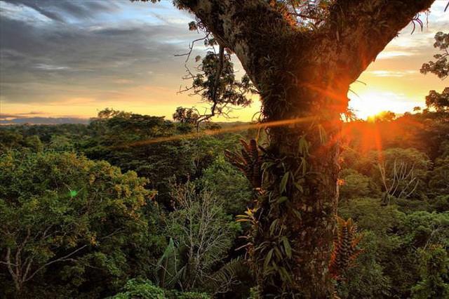 Những khu rừng đẹp nhất thế giới - Ảnh 2.