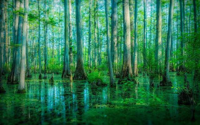 Những khu rừng đẹp nhất thế giới - Ảnh 3.