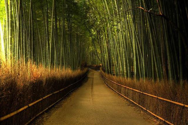 Những khu rừng đẹp nhất thế giới - Ảnh 4.