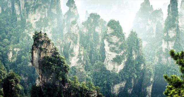 Những khu rừng đẹp nhất thế giới - Ảnh 5.