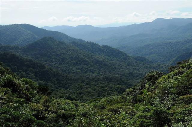 Những khu rừng đẹp nhất thế giới - Ảnh 6.