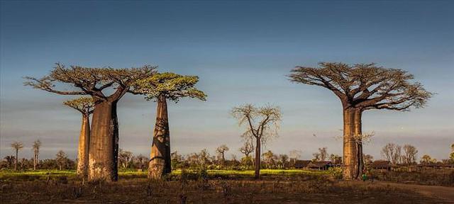 Những khu rừng đẹp nhất thế giới - Ảnh 7.