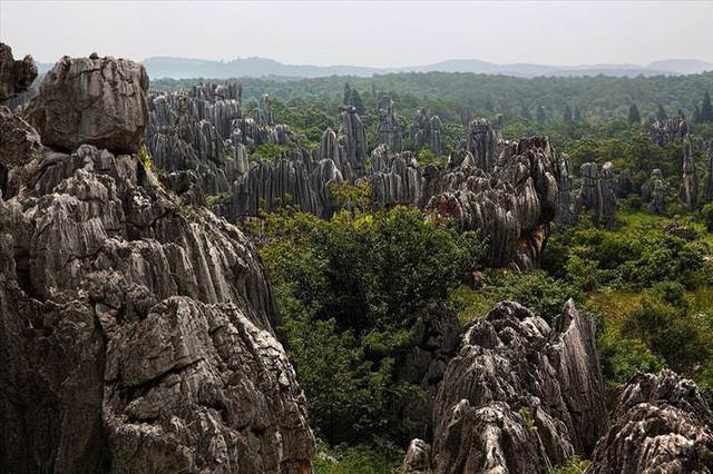 Những khu rừng đẹp nhất thế giới - Ảnh 8.