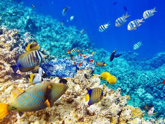 11 lý do nên đến Maldives càng sớm càng tốt - Ảnh 11.