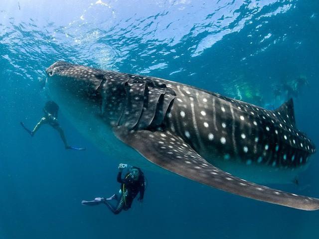 11 lý do nên đến Maldives càng sớm càng tốt - Ảnh 5.