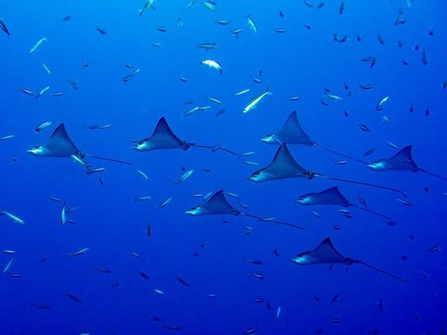 11 lý do nên đến Maldives càng sớm càng tốt - Ảnh 10.