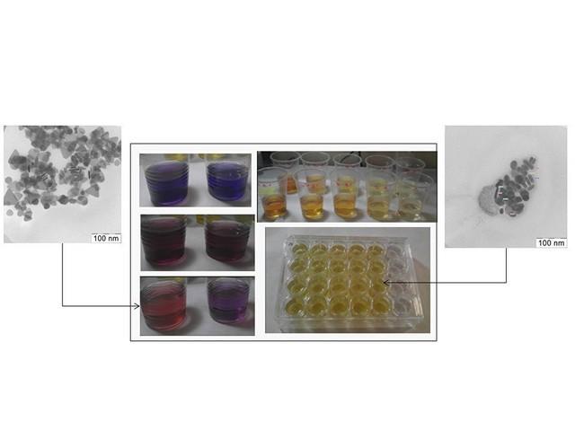 Giới khoa học Nga xác minh độc sinh thái của các hạt nano bạc