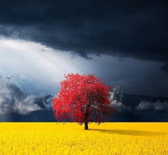 Những bức ảnh nghệ thuật đẹp lung linh, đầy sáng tạo - Ảnh 12.
