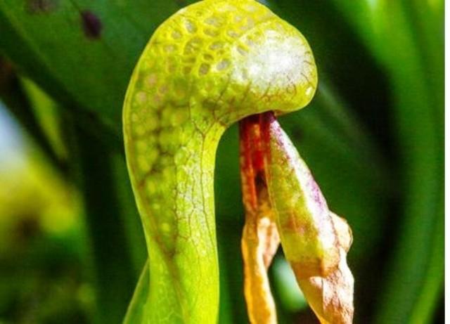 Triển lãm cây ăn thịt tại Colombia - Ảnh 2.