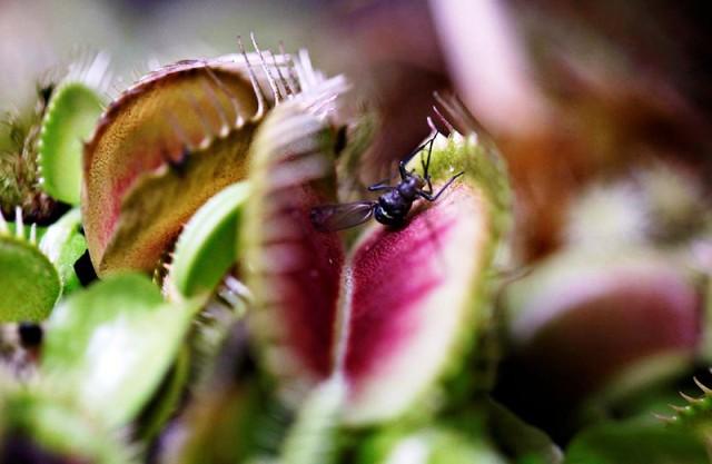Triển lãm cây ăn thịt tại Colombia - Ảnh 3.