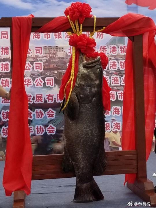 """Nhà hàng Trung Quốc """"xả thịt"""" cá khổng lồ gần tỷ đồng để lấy may - Ảnh 2."""