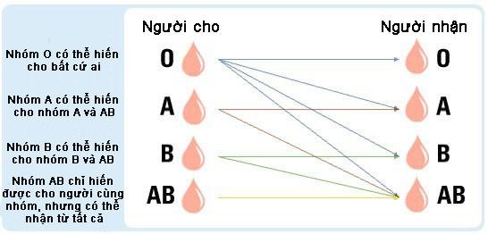 Công bố nghiên cứu chuyển máu nhóm A thành nhóm O, có thể truyền cho bất kỳ ai - Ảnh 1.