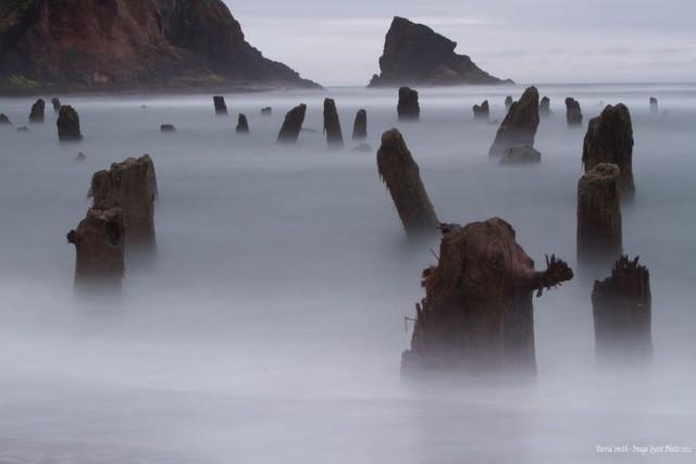 """Bí ẩn về """"khu rừng ma"""" 2.000 năm tuổi đột nhiên nổi lên trên mặt biển - Ảnh 1."""