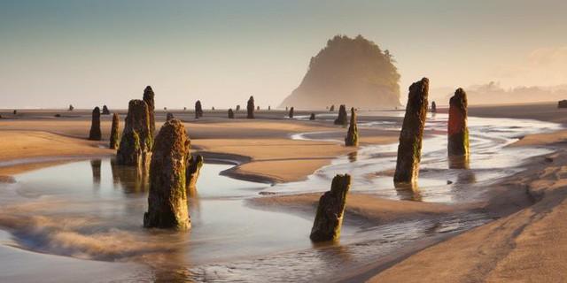 """Bí ẩn về """"khu rừng ma"""" 2.000 năm tuổi đột nhiên nổi lên trên mặt biển - Ảnh 2."""
