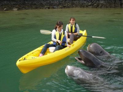 Wakayama - Vùng đất đáng để du lịch - Ảnh 3.