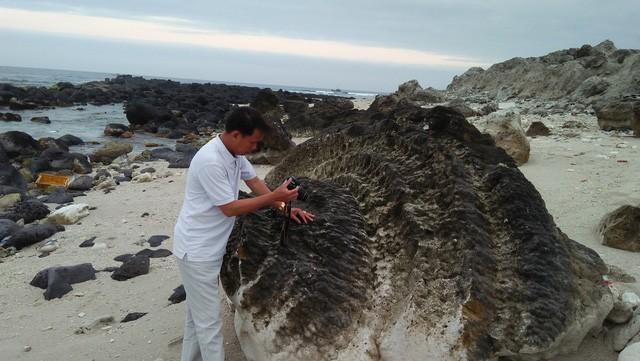 Kỳ thú hoa san hô hóa thạch 6.000 năm tuổi - Ảnh 2.