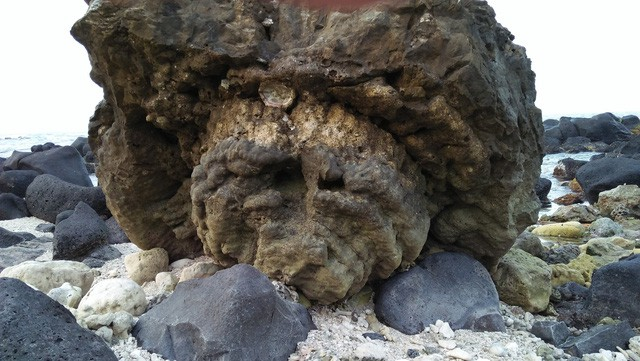 Kỳ thú hoa san hô hóa thạch 6.000 năm tuổi - Ảnh 5.