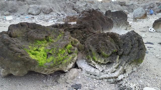 Kỳ thú hoa san hô hóa thạch 6.000 năm tuổi - Ảnh 7.