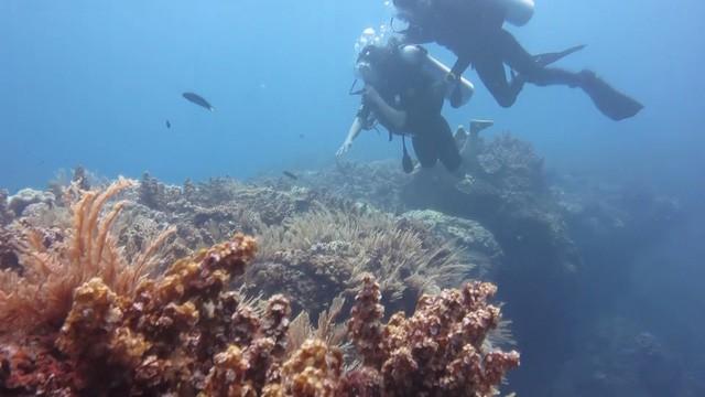 Quảng Ngãi: Kỳ thú vòm đá núi lửa hàng triệu năm tuổi dưới đáy biển - Ảnh 3.