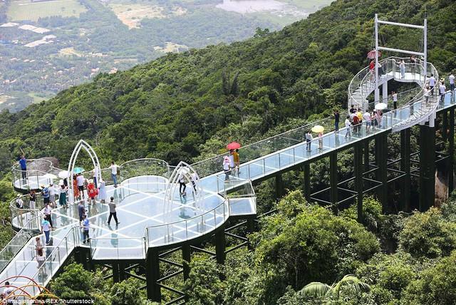 Trung Quốc mở cửa cầu đáy kính đi xuyên rừng ở độ cao 450m - Ảnh 4.