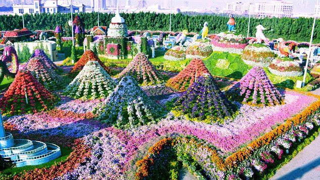 Vườn hoa khổng lồ giữa... sa mạc Trung Đông - Ảnh 11.