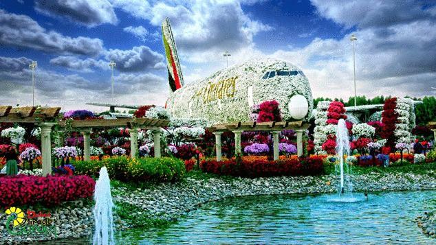 Vườn hoa khổng lồ giữa... sa mạc Trung Đông - Ảnh 8.
