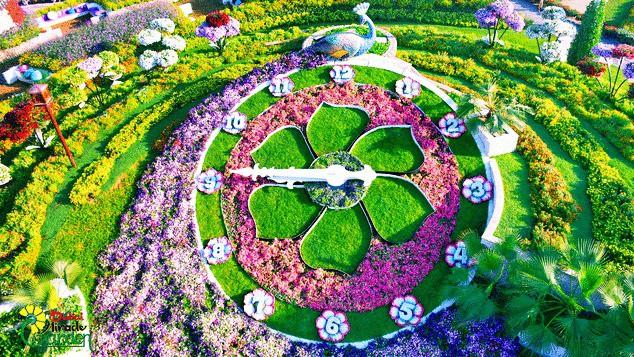 Vườn hoa khổng lồ giữa... sa mạc Trung Đông - Ảnh 5.