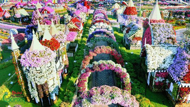 Vườn hoa khổng lồ giữa... sa mạc Trung Đông - Ảnh 1.