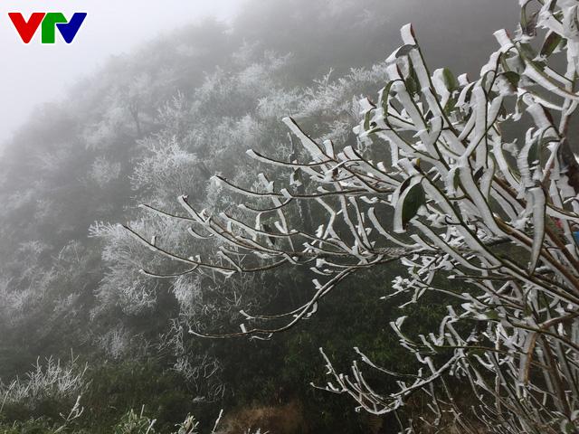 Băng tuyết tuyệt đẹp ở Sa Pa khiến du khách thích thú - Ảnh 6.