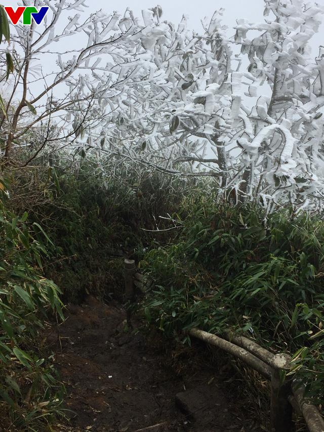 Băng tuyết tuyệt đẹp ở Sa Pa khiến du khách thích thú - Ảnh 7.