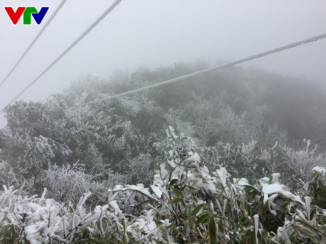 Băng tuyết tuyệt đẹp ở Sa Pa khiến du khách thích thú - Ảnh 8.