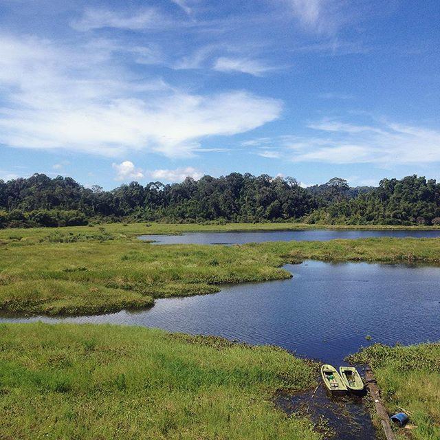 Khám phá đầm lầy nhiều cá sấu nhất Đông Nam Bộ - Ảnh 1.