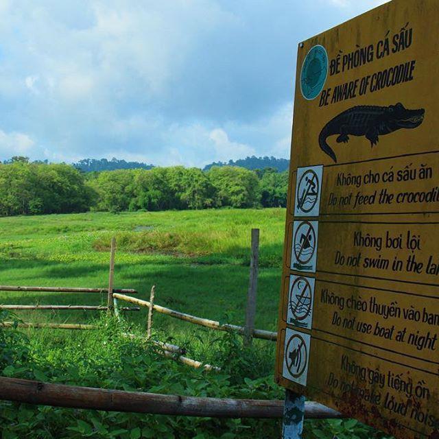 Khám phá đầm lầy nhiều cá sấu nhất Đông Nam Bộ - Ảnh 2.