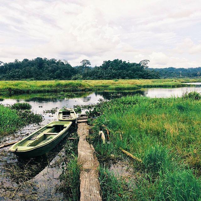 Khám phá đầm lầy nhiều cá sấu nhất Đông Nam Bộ - Ảnh 3.