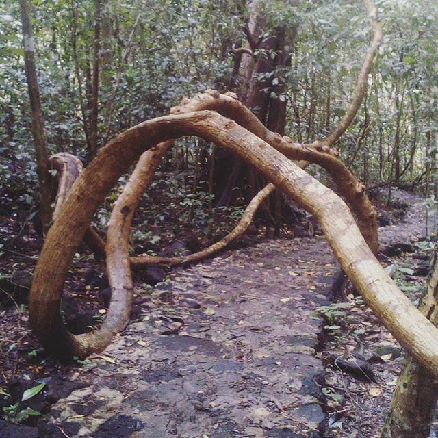 Khám phá đầm lầy nhiều cá sấu nhất Đông Nam Bộ - Ảnh 8.