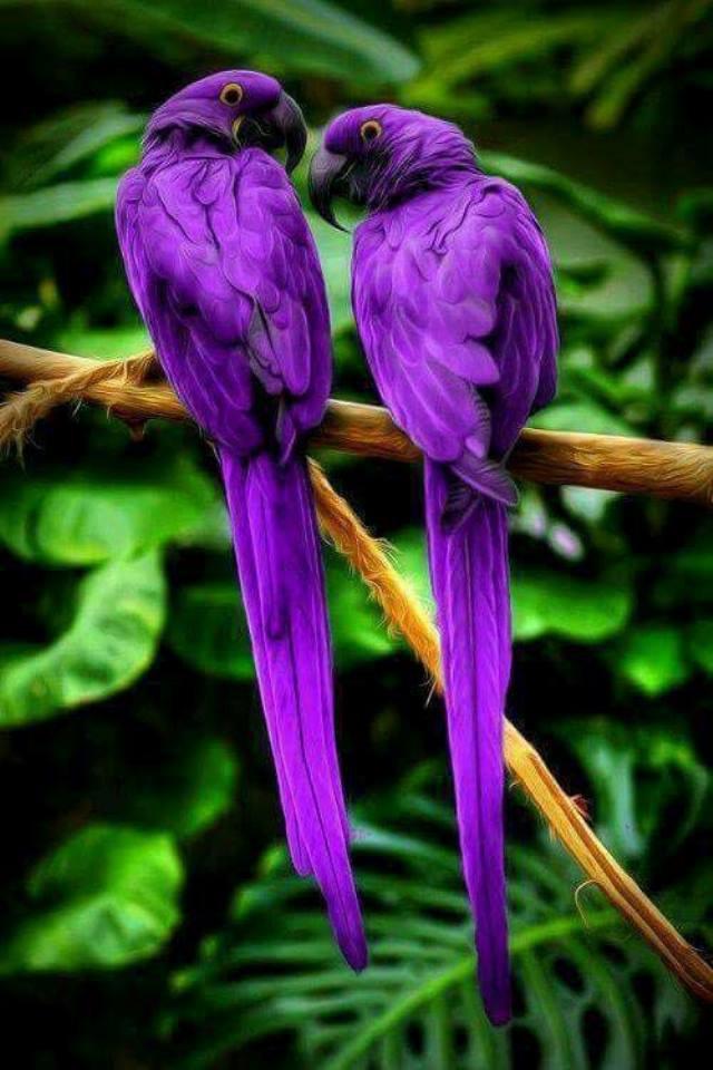 Khu vườn nhiều chim nhất thế giới - Ảnh 7.