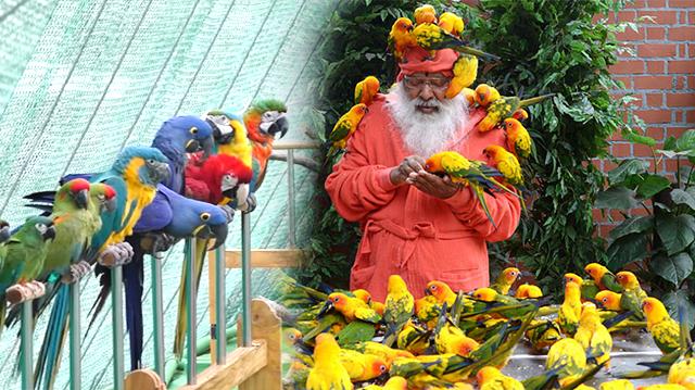 Khu vườn nhiều chim nhất thế giới - Ảnh 1.