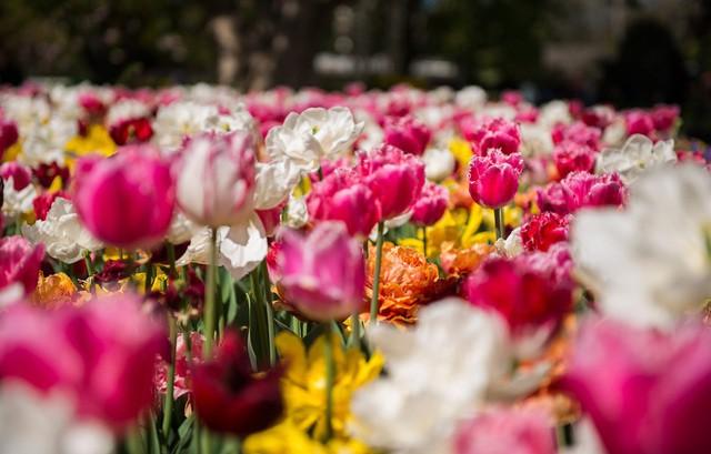 Mùa xuân đẹp như tranh vẽ ở phía bên kia trái đất - Ảnh 2.
