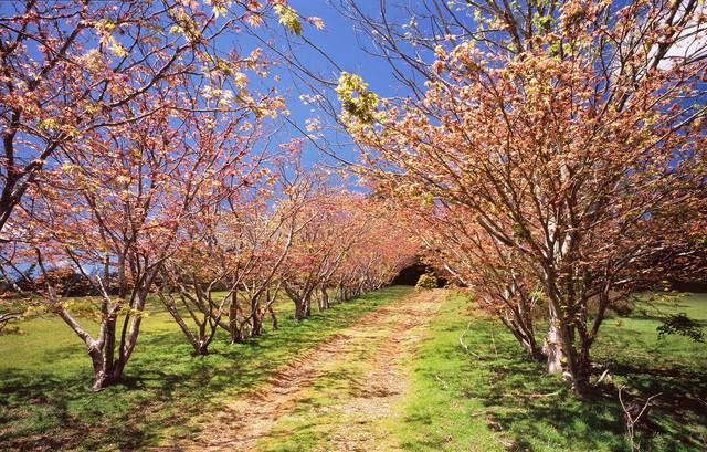 Mùa xuân đẹp như tranh vẽ ở phía bên kia trái đất - Ảnh 3.