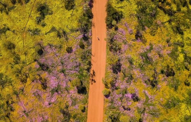 Mùa xuân đẹp như tranh vẽ ở phía bên kia trái đất - Ảnh 5.