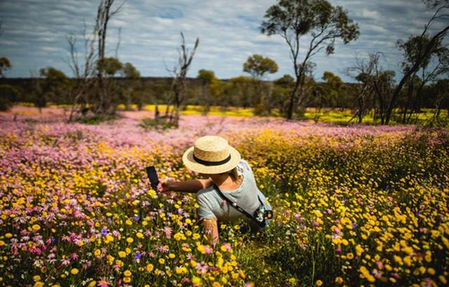 Mùa xuân đẹp như tranh vẽ ở phía bên kia trái đất - Ảnh 6.