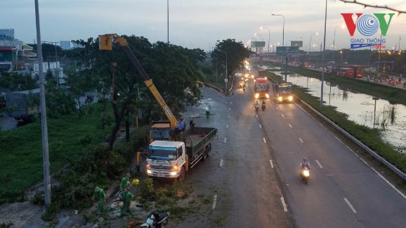 Hàng loạt cây xanh trên Quốc lộ 1 (TP.HCM) ngã đổ trong mưa - Ảnh 1.