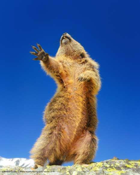 Những khoảnh khắc đáng yêu của các loài động vật khiến bạn bật cười - Ảnh 2.