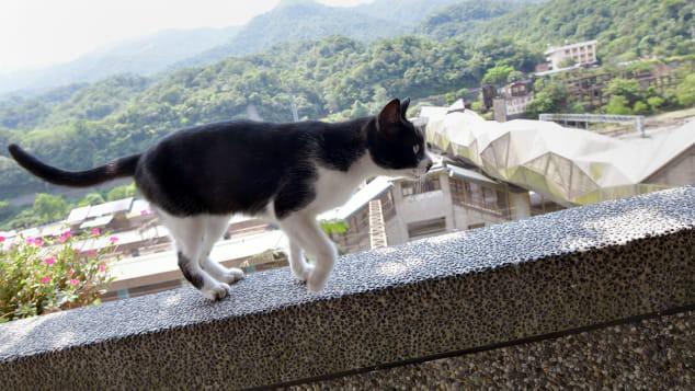 Nơi loài mèo được cưng chiều nhất thế giới - Ảnh 1.